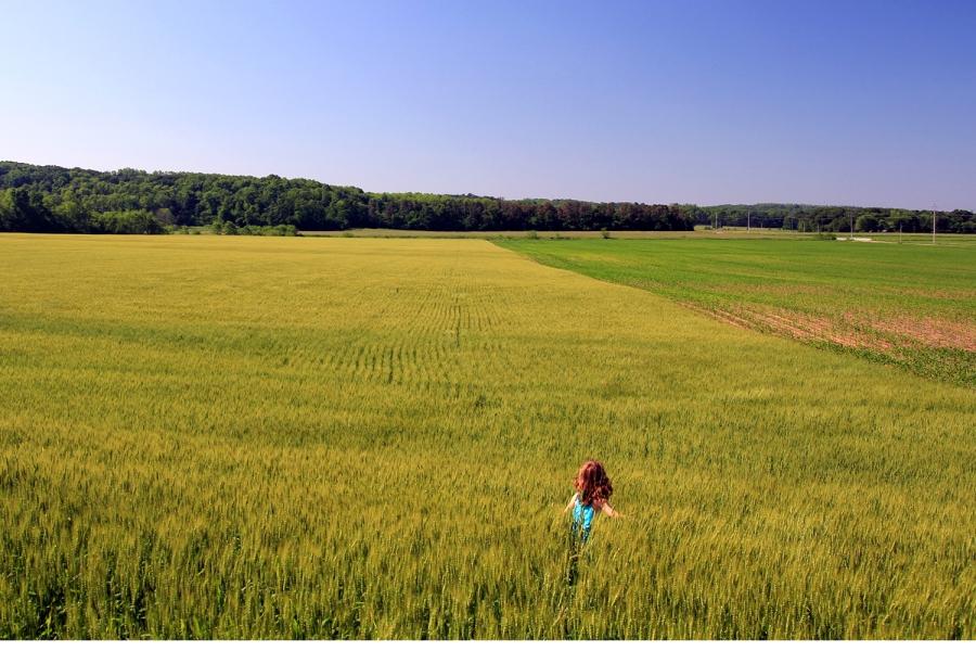 Amelia in Illinois rye field
